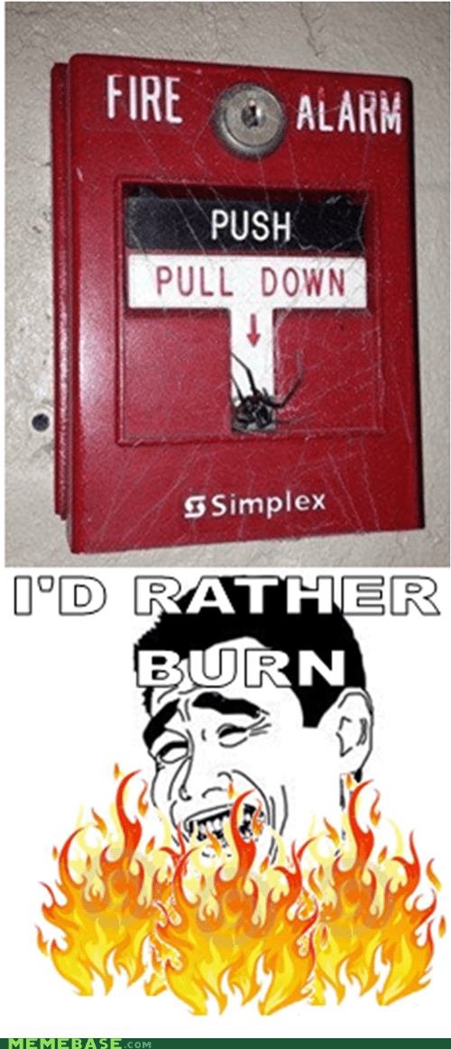 spiders,fire,fire alarm,burn
