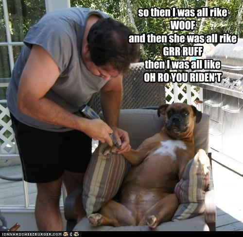 dogs salon manicure pedicure boxer gossip girl talk - 6697293056