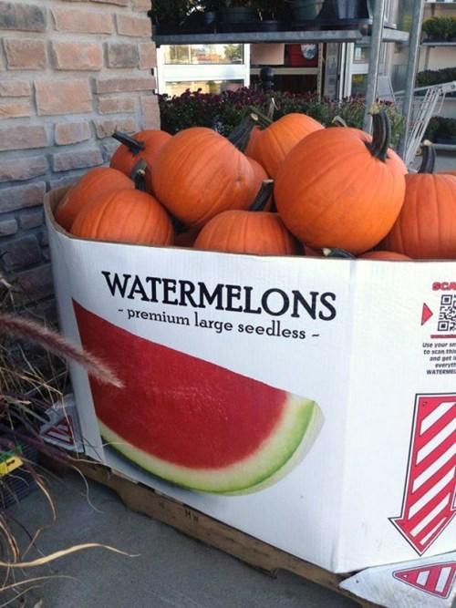 fruit halloween pumpkins watermelon