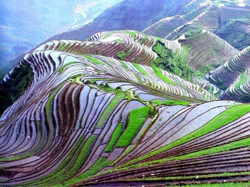 rice fields China fields landscape pretty colors