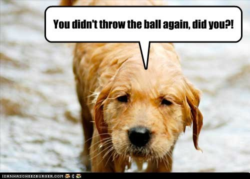 fetch wet dogs fool me once puppy ball golden retriever - 6697838848