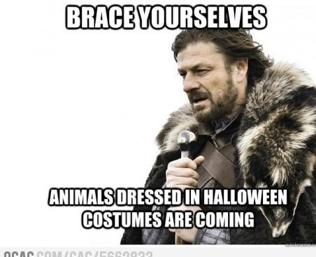 matter of time,brace yourselves,Winter Is Coming,halloween,costume,animals,hallowmeme,g rated