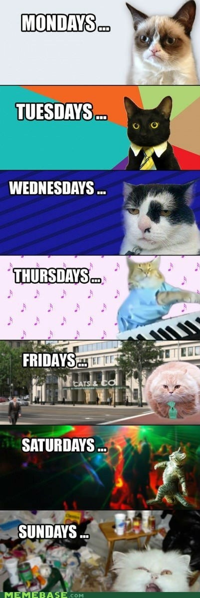 cat week timeline today is keyboard cat parties Cats weekdays weekends Memes - 6697962496