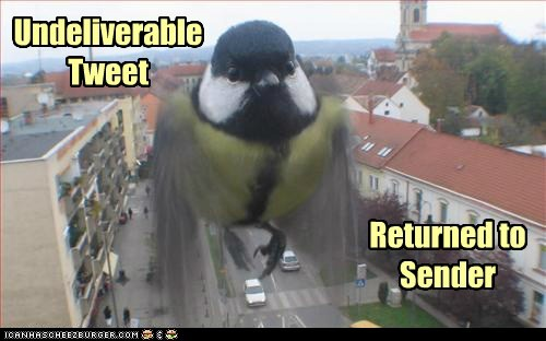 twitter returned pun camera bird tweet - 6698269440