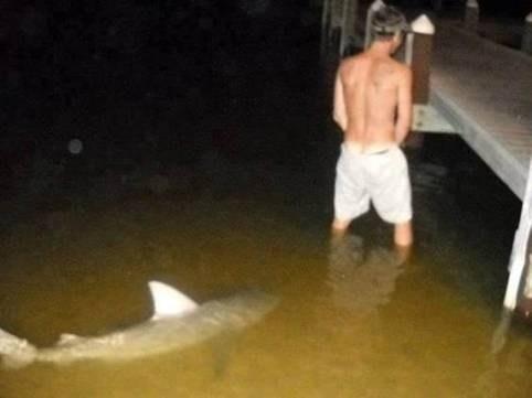 peeing shark snuck up on - 6698611968