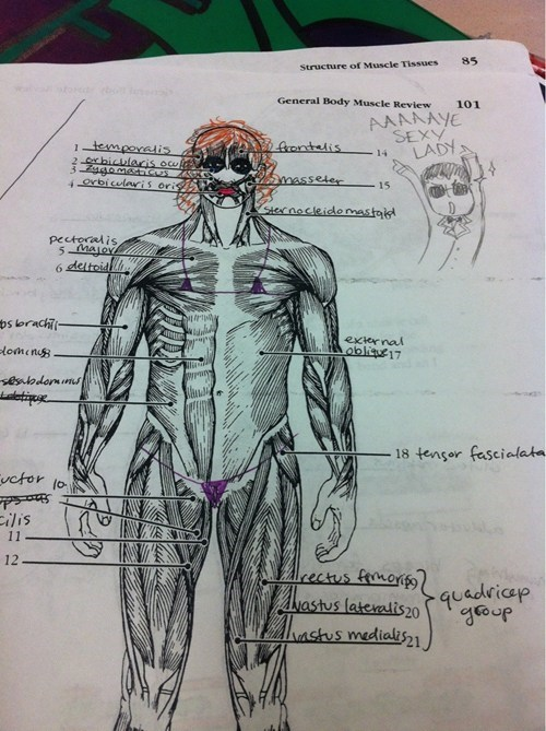 what have you done test humor biology anatomy - 6698662912
