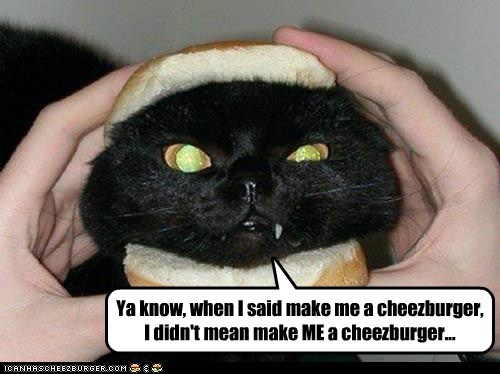 Cheezburger Image 6698976256