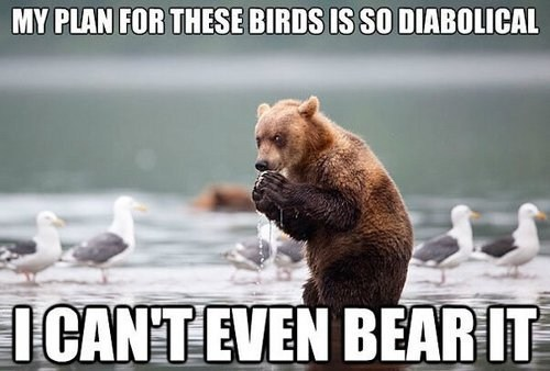 birds,evil,puns,bear,plans