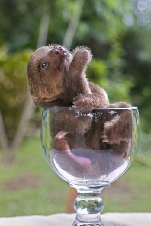 Babies fancy glass squee sloth