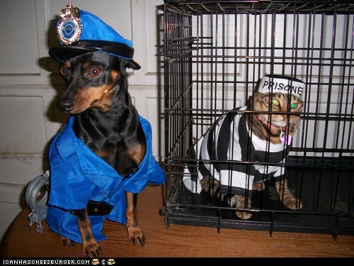 Cats dogs police jail prisoners policemen costume halloween halloween pet parade