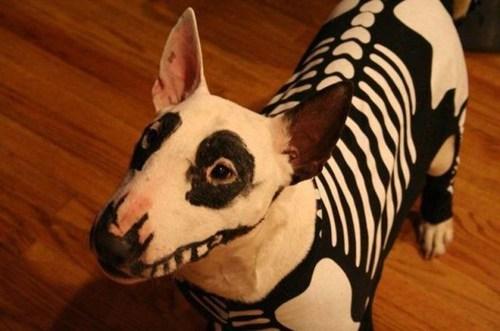 skeleton dogs - 6699498752