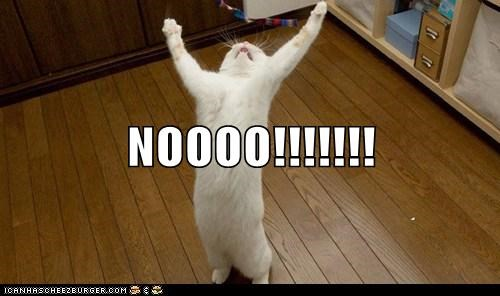 NOOOO!!!!!!! - Lolcats - lol   cat memes   funny cats   funny cat pictures  with words on them   funny pictures   lol cat memes   lol cats