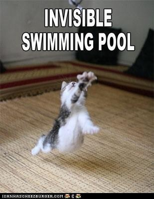 from the vault,invisible,swimming pool,pool,swimming,Cats,captions