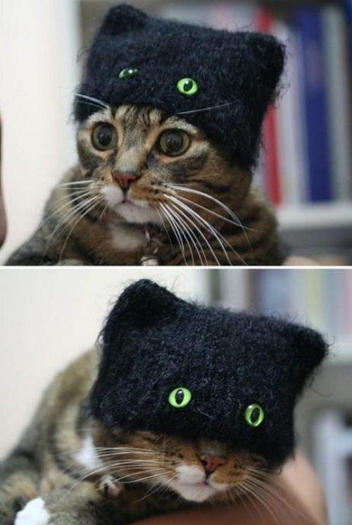 cat hat - 6699561216