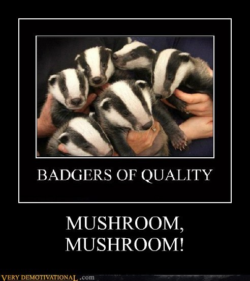 mushroom,badger,quality