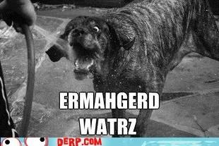 war Ermahgerd goggie water dogs derp - 6700498432