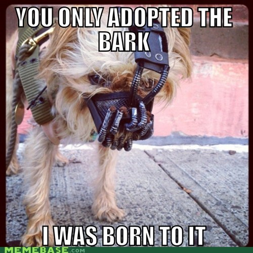 dogs,bane,costume