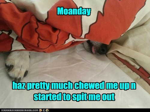 Moanday haz pretty much chewed me up n started to spit me out