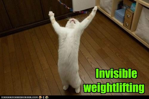 invisible weightlifting do you even lift lift weights exercise gym Cats captions - 6701011200