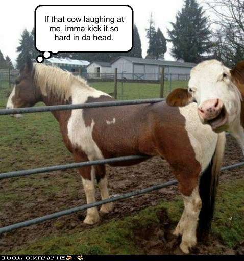 kick,cow,fence,stuck,laughing,horse