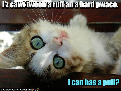 caught stuck pull rock hard place Cats captions - 6701323776