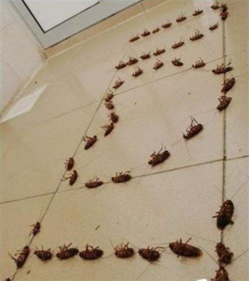 i heart you,cockroaches,gross