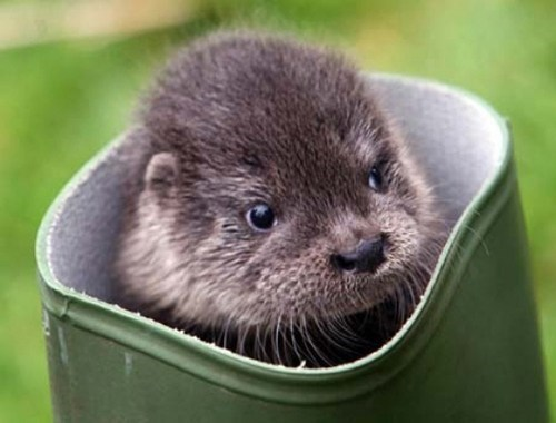 Fluffy boots otters galoshes squee whiskers delightful insurance