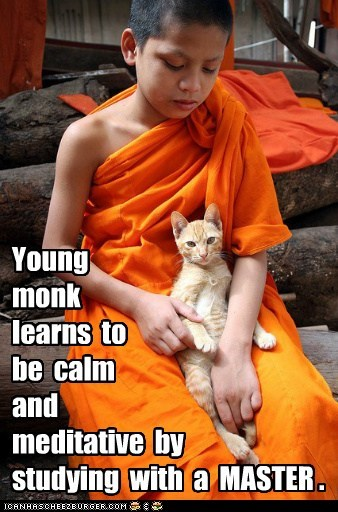 Cats,captions,buddhism,monk,master,study,calm,meditate
