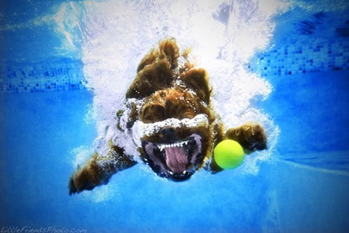 early bird special underwater dogs - 6702218752