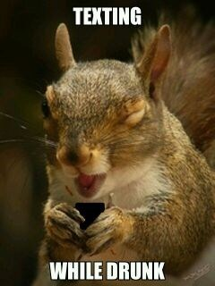 texting while drunk,squirrel,texting,too drunk