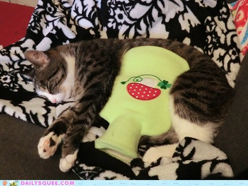 reader squee hot water bottle pet Cats squee - 6702473728