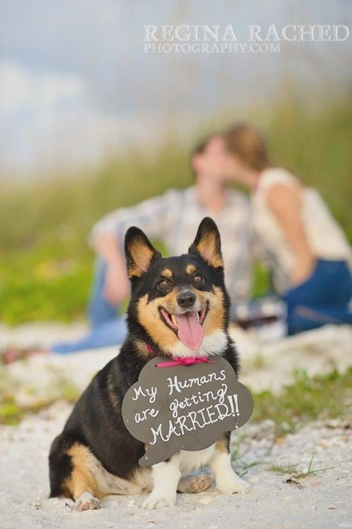 Wedding Announcement best dog - 6702475008