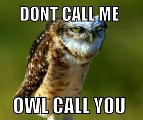 puns,owls,don't call me,birds,captions,calling