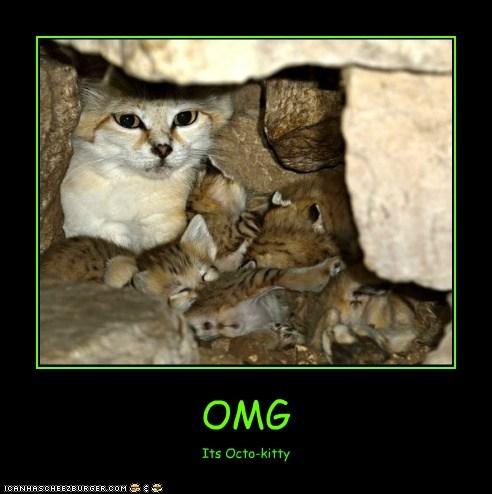 OMG Its Octo-kitty