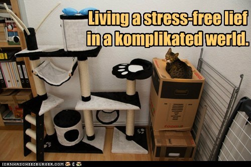 Living a stress-free lief in a komplikated werld.