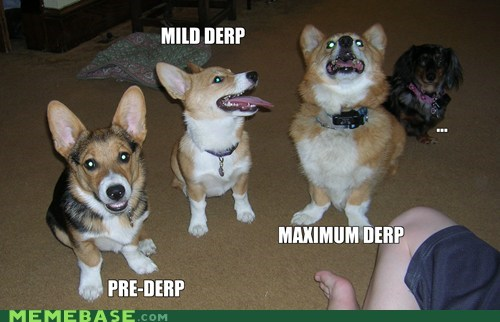 pets goggie corgi dogs derp stages - 6703337472