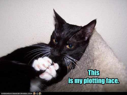 plot face plotting evil Cats captions - 6703525376