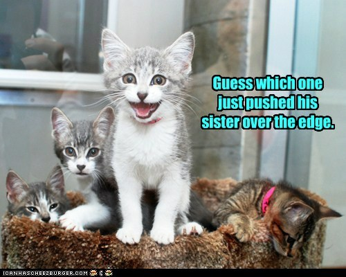 edge push guess who Cats captions - 6703535360