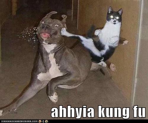 ahhyia kung fu