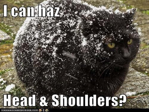 head-shoulders head and shoulders Cats captions dandruff snow
