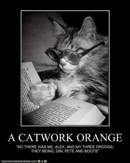 "A CATWORK ORANGE ""SO THERE WAS ME, ALEX, AND MY THREE DROOGS, THEY BEING, DIM, PETE AND BOOTS"""