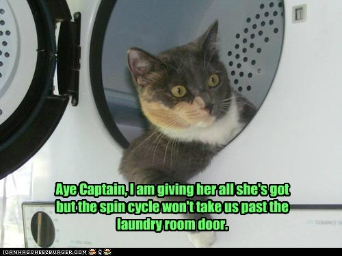 laundry room,washer,Cats,captions,captain ship,fly,Star Trek