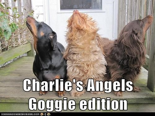 dogs pose charlies-angels dachshund Movie - 6704639744
