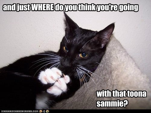 and just WHERE do you think you're going with that toona sammie?