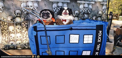 doctor who,dogs,halloween,costume,pugs,ghoulish geeks,costumed critters,g rated