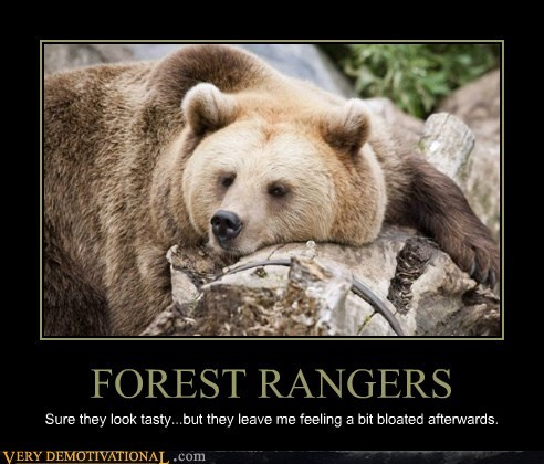 bear,forest ranger,food