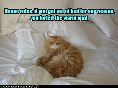 Cats captions house rules house rule warm spot forfeit bed
