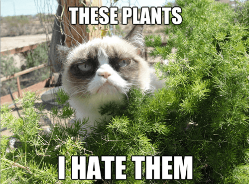 Cats,Grumpy Cat,tard,plants,hate,hatred,i hate them,captions