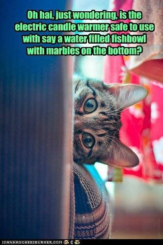 goldfish cook fish Cats captions question - 6704984832