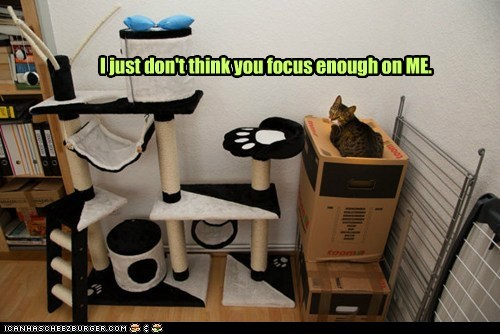 Cats captions focus me ego narcism - 6704993024